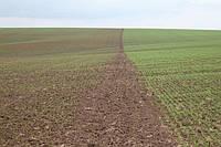 Біокомплекс для озимих зернових