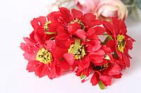 Цветы рудбекии диаметр 4 см, красного цвета