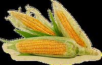 Семена кукурузы. Крупная фасовка.
