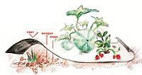 Агроволокно ТМ «Агротекс» Двойная защита. Черно-белое агроволокно 80г/м (1,6*100 м)