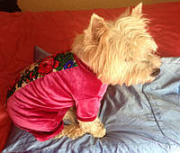 Комбинезон штанишками для собак из велюра  в стиле Матрешка