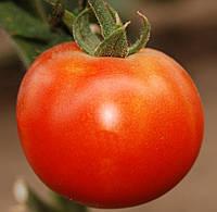 ПЬЕТРО F1 - семена томата индетерминантного, CLAUSE