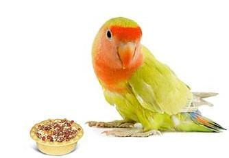 Витамины. Минералы. Лакомства для птиц