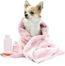 Шампуни, кондиционеры, масла для собак