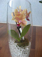 Мини орхидея в колбе