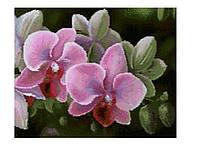 Набор в алмазной технике Орхидеи СК 608608
