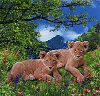 Фото обои Львята на траве