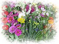 Семена цветов. Крупная фасовка.