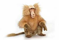 Мягкая игрушка  обезьяна Гамадрил HANSA 43 см