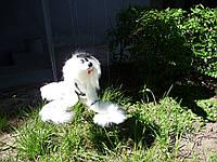Собака марионетка. Живая пушистая игрушка на нитях