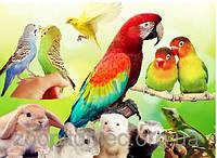 Попугаи мелкие, средние крупные