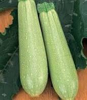 Семена кабачка Искандер 500 шт.