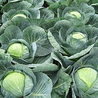 Семена капусты Центурион F1 10 000 сем.
