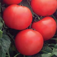 Семена томата Дебют F1 1000 сем