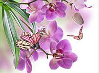 """Алмазная вышивка """"Орхидея и бабочки"""""""
