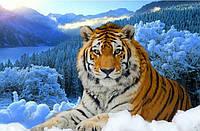 "Алмазная вышивка Тигр на снегу"""