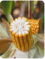Удобрение на кукурузу