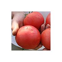 Семена томата розового ТЕТМ 010 F1 250 шт