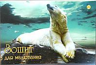Тетрада, Альбом для рисования А4, 16 стр,  перфорация, скоба арт 32608
