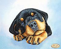 Ткань с рисунком для вышивки бисером Щенок ротвейлера. Дэйзи ТА-226