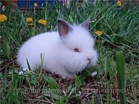 Подробности  о кроликах .