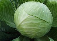 """Семена - Капуста для длительного хранения """" Декурион F1"""" ТМ Клоз (Clause) Франция, 2500 семян"""