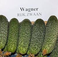 "Семена - Огурец ""Вагнер F1""  ТМ "" Rijk Zwaan""(Голландия), 250 шт"