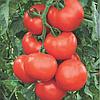 Семена томата Абелус F1 100 семян Rijk Zwaan
