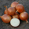 Семена лука Универсо F1 100000 семян Nunhems
