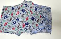 Трусики-шорты для мальчика DONI,Турция,0-1 год