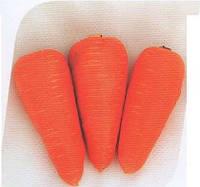 Морковь СВ 3118 ДХ F1 1,4-1,6 200 000сем. Seminis.