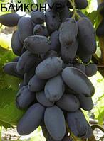 Саженцы винограда Байконур (Ранний)