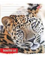 """Тетрадь """"Бриск Дикий кіт"""" 24 листа в клетку"""