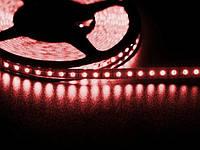 Светодиодная лента 3528 120 LED красная 4.0-4.5 Lm/LED влагозащищена IP65