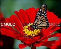 """Алмазная вышивка """"Бабочка на красном цветке"""""""