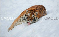 """Алмазная вышивка """"Уссурийский тигр на снегу"""""""