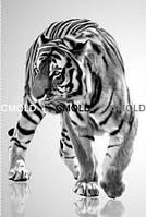 """Алмазная вышивка """"Чорно-белое фото тигра"""""""