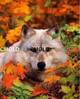 """Набор для рисования камнями """"Волк в осеннем лесу"""""""