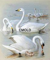 """Алмазная вышивка """"Белые лебеди"""""""