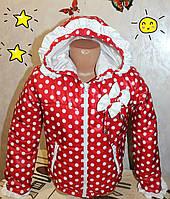 Весенняя курточка на девочку  ''Бантики'' красная  в белый горох.