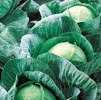 ВЕСТРИ F1  - семена капусты белокачанной средней 2500 семян , Semenis