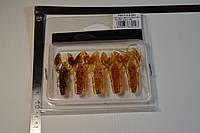 Силиконовый сьедобный рачек цвет машинного масла от микадо