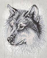 """Рисунок на ткани для вышивания бисером """"Волк"""""""