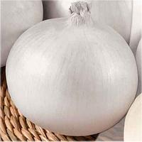 СЬЕРА БЛАНКА F1  - семена лука репчатого белого 250 000 семян, Semenis