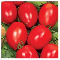 Семена томата сорт Новичок 0,5кг