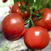 ПОЛФАСТ F1 - семена томата детерминатного 5 грамм, Bejo Zaden