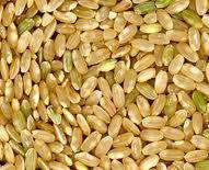 Рис нешлифованный (круглозернистый)