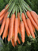 Морковь Престо F1 Vilmorin 25000 семян