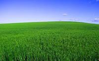 """Травосмесь для пастбищ (Суміш багаторічних трав """"На пасовище"""")"""
