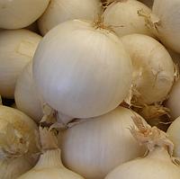 ХИЕЛО - семена лука репчатого озимого белого PR 250 000 семян, Bejo Zaden